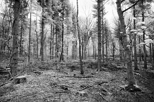 The woodland I headed to has been decimated but still I took a shot.