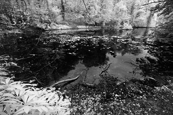 A short walk through the woods brought me to Abbots Pool. Used in medieval times by the monks of the St Augustine monastry